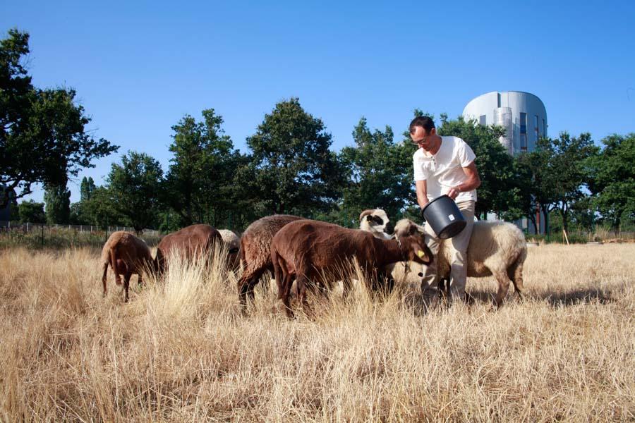 Alternature moutons et ch vres en zones industrielles for Architecte paysagiste alsace