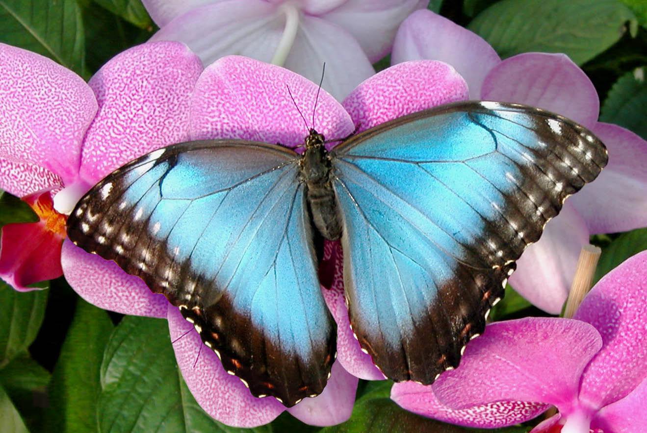 Jardins des papillons les jardins de la m tamorphose - Images de papillon ...